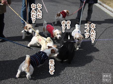20110417_昭和記念公園7