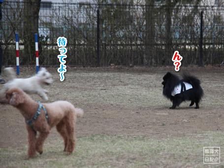 20110411_小型犬たち6