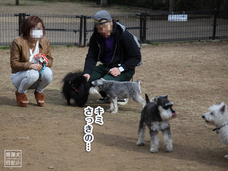 20110411_小型犬たち2