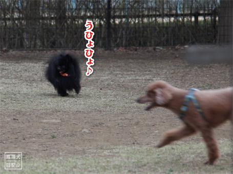 20110411_小型犬たち5