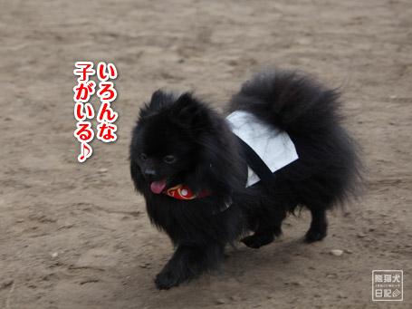 20110411_小型犬たち4