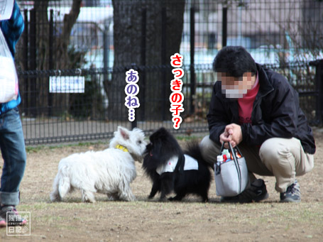 20110411_小型犬たち3
