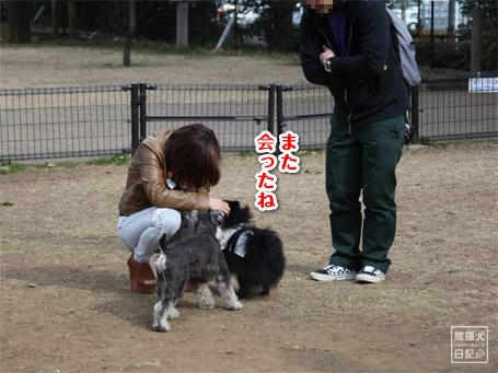 20110411_小型犬たち1