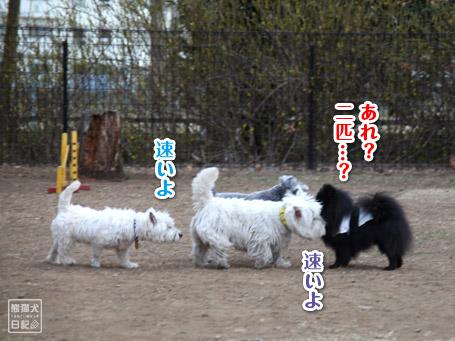 20110411_小型犬たち7