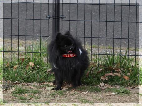 20110411_小型犬たち8