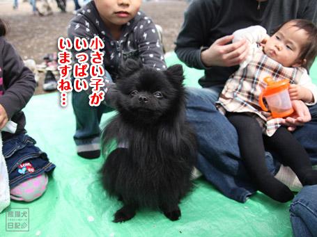 20110411_お花見6