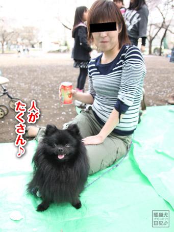 20110411_お花見4