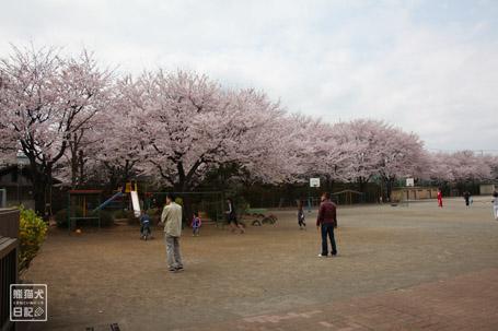 20110411_お花見1