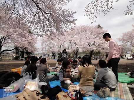 20110411_お花見2
