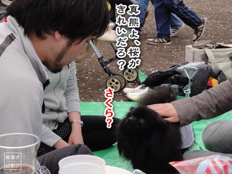 20110411_お花見11