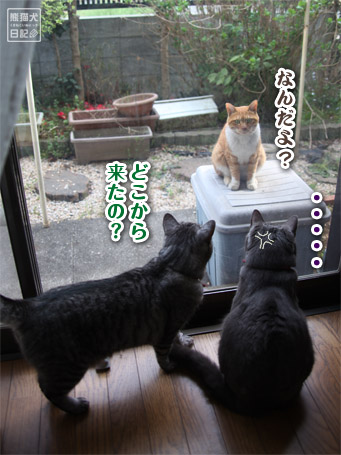 20110417_猫メンチ6