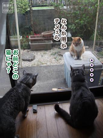 20110417_猫メンチ5