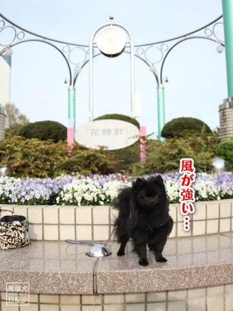 20110418_大きな公園1