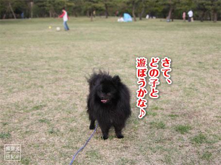 20110418_大きな公園7