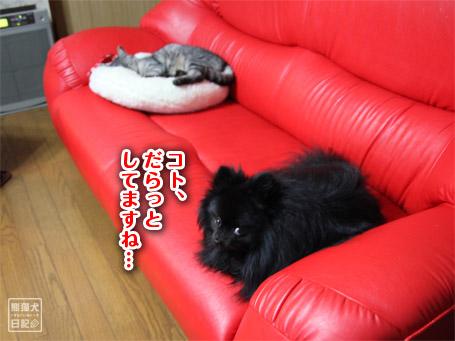 20110420_寿喜の寝姿8
