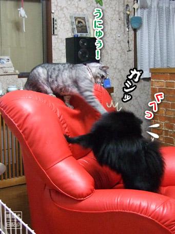 20110421_真熊VS寿喜4
