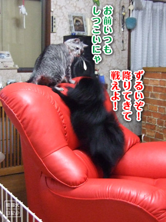 20110421_真熊VS寿喜5
