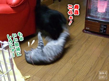 20110421_真熊VS寿喜6