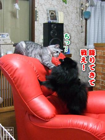 20110421_真熊VS寿喜2