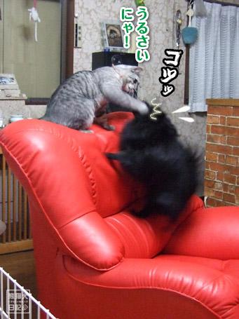 20110421_真熊VS寿喜3