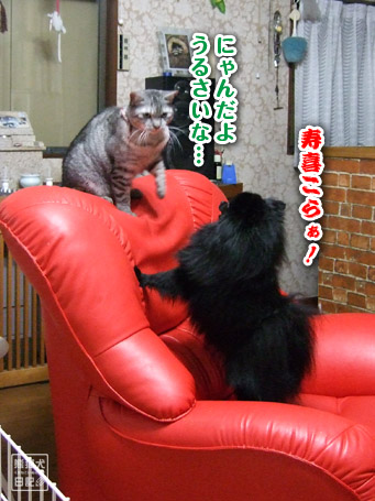 20110421_真熊VS寿喜