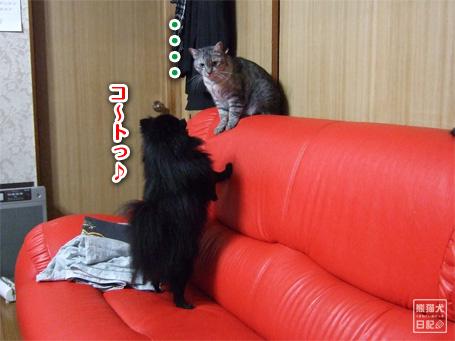 20110421_真熊VS寿喜7