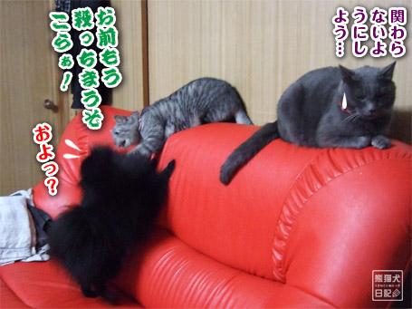 20110421_真熊VS寿喜8