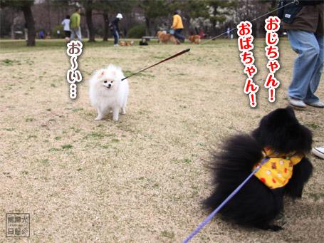 20110422_大きな公園4