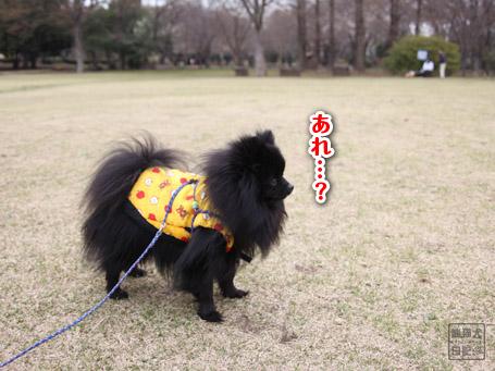 20110422_大きな公園6