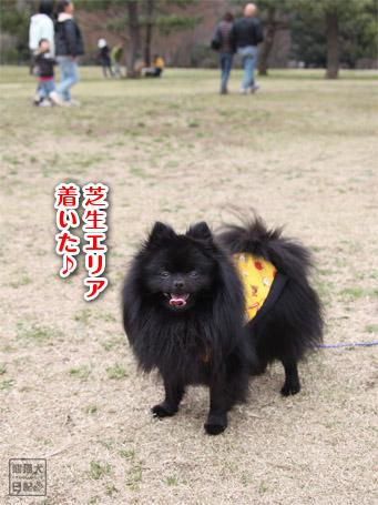 20110422_大きな公園5