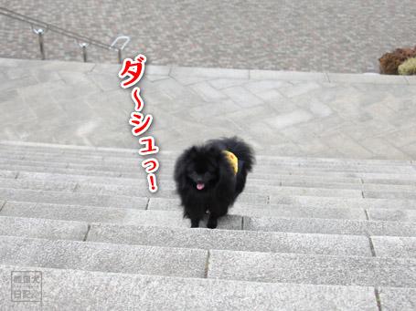 20110424_階段ダッシュ3