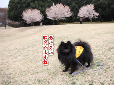 20110424_階段ダッシュ2