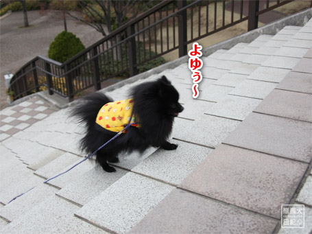 20110424_階段ダッシュ5