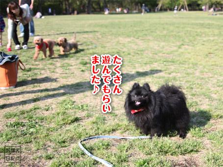 20110430_いろんな犬6
