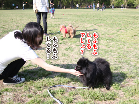 20110430_いろんな犬5