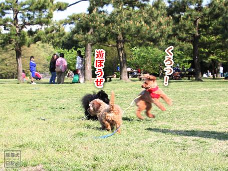 20110430_いろんな犬3
