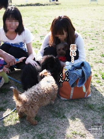 20110430_いろんな犬4