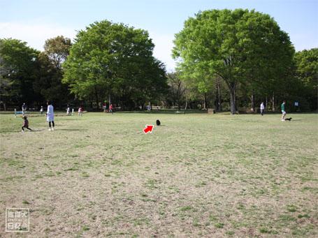 20110430_いろんな犬1