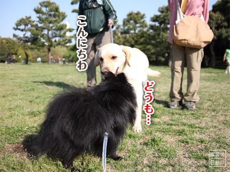 20110430_いろんな犬8