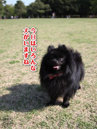 20110430_いろんな犬10