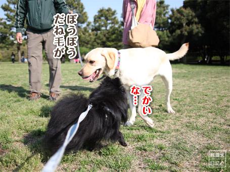 20110430_いろんな犬9