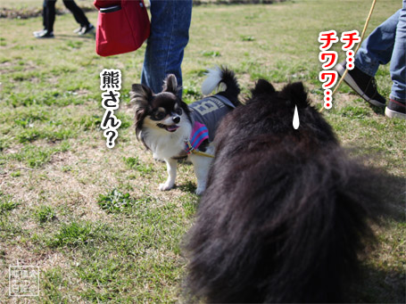 20110430_いろんな犬7