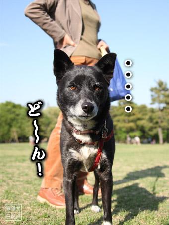 20110501_ヤッスク4