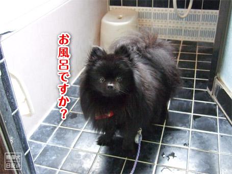 20110504_お風呂1