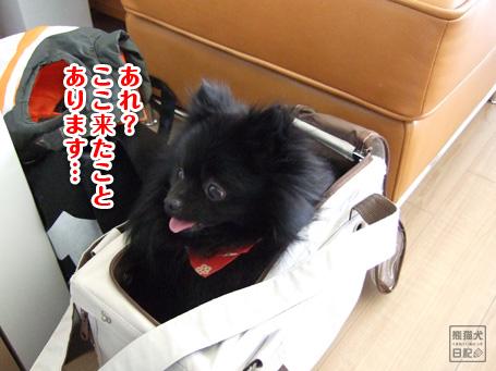 20110509_カディ邸ツアー1