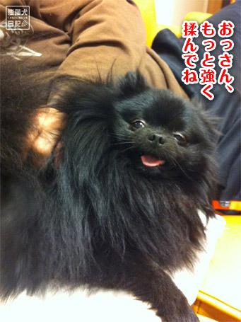 20110512_韓国からの帰還1