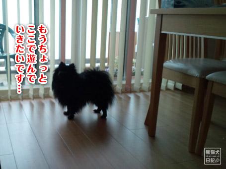 20110512_韓国からの帰還10