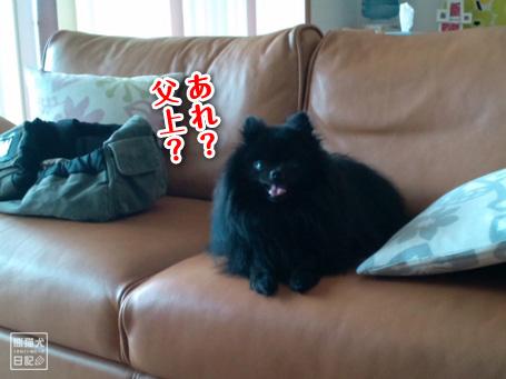 20110512_韓国からの帰還7