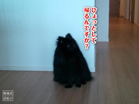 20110512_韓国からの帰還9