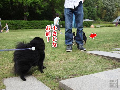 20110519_ほのぼの風景5